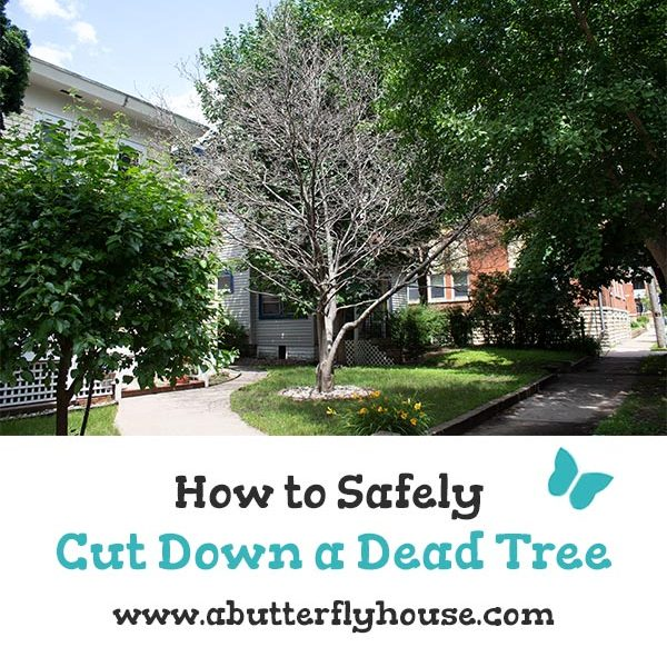 Dead trees are dangerous to have in your yard. Learn how to safely cut down a tree with this step by step tutorial! #Backyard #HomeImprovement